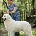 минимум условия оплаты за вязку собак виза для няни-иностранки: