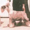 CASSEOPIA V. STAHLKRIEGER