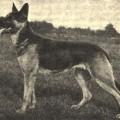 FLORA BERKEMEYER