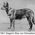 ELSA VON SCHWABEN