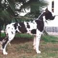 SONNY-A DEL BIANELLO