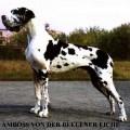 AMBOSS V.D. BEELENER EICHE
