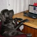BADEN-BADEN DEL AZART DOG