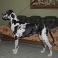 DOMINO'S DOG AFINA