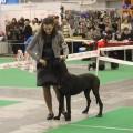 MERSEDES DEL AZART DOG