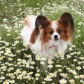 FLY PAPILLON AMANDA BEAUTY