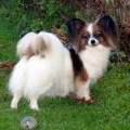 HELICE PAPILLON V. XENELLOS GLADNESS