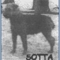 SOTTA -AIREDALE