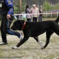 RAMENSKII GRIZLI ROYUNCHUK AVTORITET DOGS