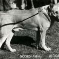 GASSAR-HAN