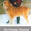 AK-NUKER HUNTA