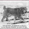 AK NUKER DUSHMAN