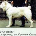 CHINGIZ AK NUKER