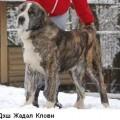 DESH ZHADAL KLOVI