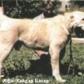 AFI-KAYDAR BASAR