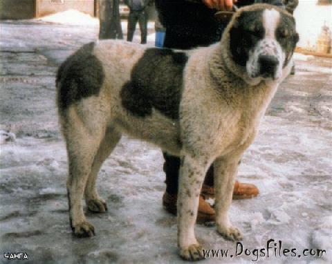 Dog Breed Disease Database
