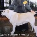 ORTODOX KONVENT KUMTASH