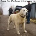 SHER-GIZ ZERBA