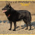 DYNA V.D. WIETEKE'S HOEVE