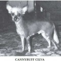 CANNYBUFF CILVA