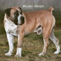 MOUZER ADOLPH
