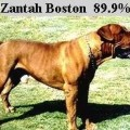 ZANTAH BOSTON