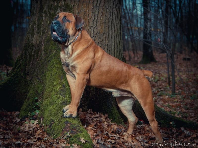 http://www.dogsfiles.com/mkportal/modules/dogsbase/albums/293/32894/foto26248.jpg