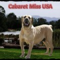 CABERET MISS USA