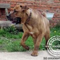 SAVANNA BOERBOELE NOBEL