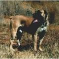 MOUZER ROLO FAME WOLF
