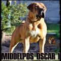 MIDDELPOS OSCAR 1