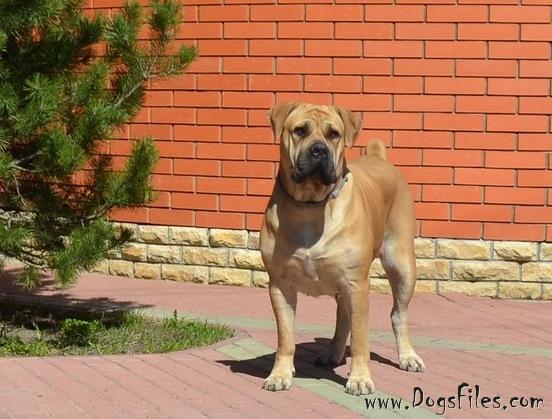 http://www.dogsfiles.com/mkportal/modules/dogsbase/albums/293/864/foto30559.jpg
