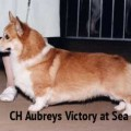 AUBREY'S VICTORI AT SEA