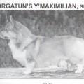 BORGATUN'S Y'MAXIMILIAN