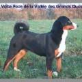 VOLTE FACE DE LA VALLEE DES GRANDS DUCS