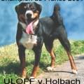 ULOFF POLLUX VOM HOLBACH