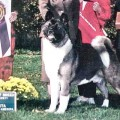 REGALIA'S DARQ WOLF
