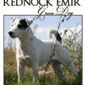 REDNOCK EMIR GREEN DOG