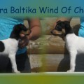 TERRA BALTIKA WIND OF CHANGE