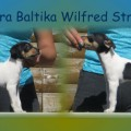 TERRA BALTIKA WILFRED STRONG