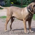 BRADOCK JB DE SANTA LUZIA