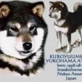 KUROYUUME GO YOKOHAMA ATSUMI