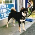 SASA NO KUROICHI GO SASASHITA KENSHA