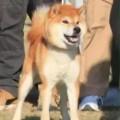 KOUJINRYUU GO TOSA KUROSHIOSOU