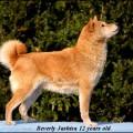 BEVERLY JASHISA