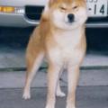 TENKEI GO ETCHUU WAKASUGISOU