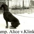 ALICE V.KLINKETAL