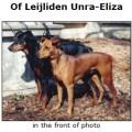 OF LEIJLIDEN UNRA-ELIZA