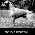 MUNKIN RASMUS