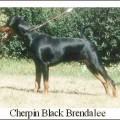 CHERPIN BLACK BRENDALEE